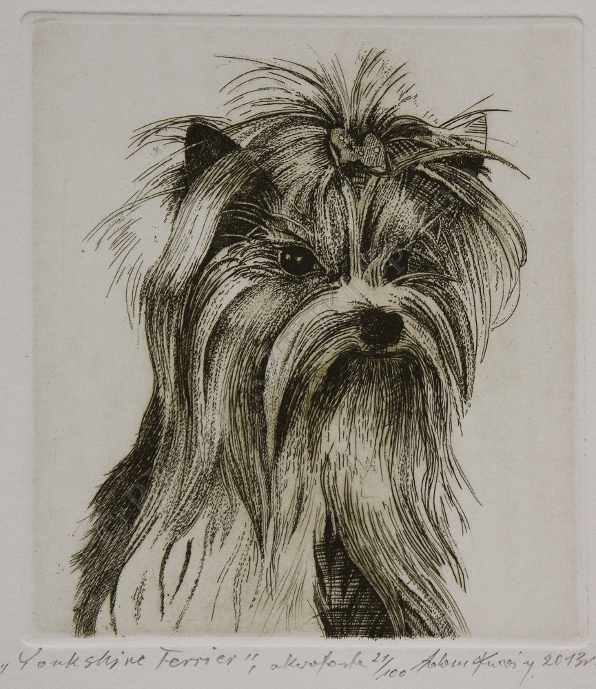 Kwa�ny Adam, Yorkshire Terrier
